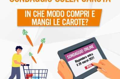 News article visual - carrot survey