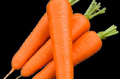 prodotti carota