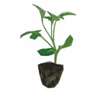 Rootstock_Default
